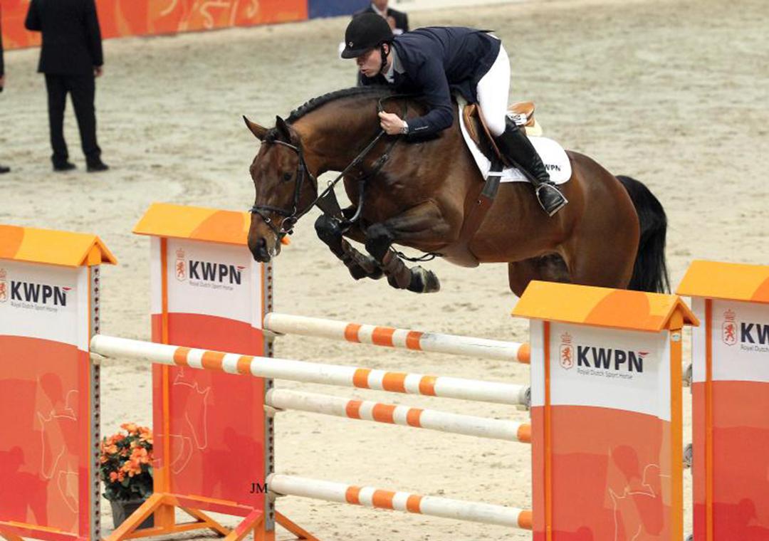 Stallion by Eldorado - born 22.03.21