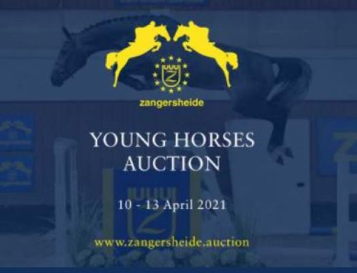 Zangersheide Quality auction!